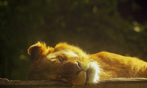 Sleepy Economy Awakens, Economic 3 Ms Now in Vogue