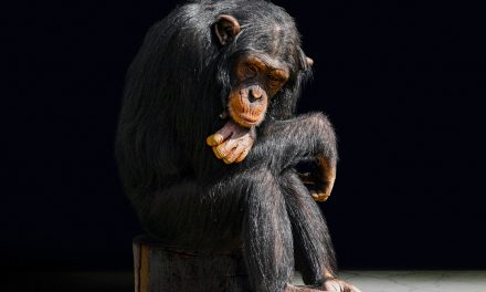 Why Some Mid-Level Managers Feel Like Monkeys